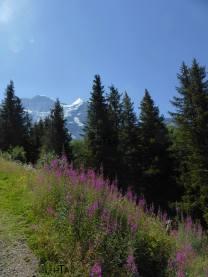 Jungfrau14