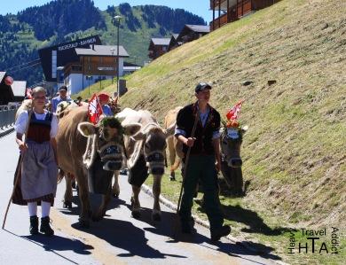 Cow show ;-)